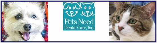 dental care feature (550x151)