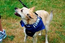 Furry 5K Walker - Pets of our Seattle Vet Hospital