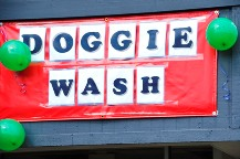 Seattle Vets Dog Wash Fundraiser