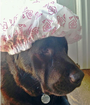Adam in his shower cap getting ready for his bath at Hawthorne Hills Veterinary Hospital in Seattle Washington