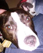 Ripley loves Hawthorne Hills Veterinary Hospital in Seattle Washington