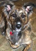 Sadie loves Hawthorne Hills Veterinary Hospital in Seattle Washington