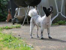 Shadow loves Hawthorne Hills Veterinary Hospital in Seattle Washington
