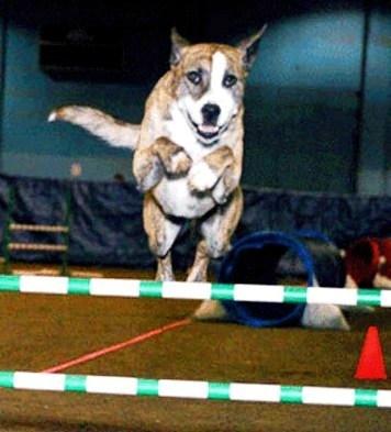 Callie loves Hawthorne Hills Veterinary Hospital in Seattle Washington