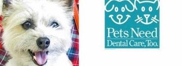dental care feature (550x151) - Copy