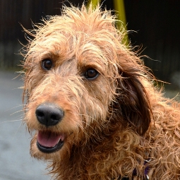 Dog and Cat Grooming in Seattle