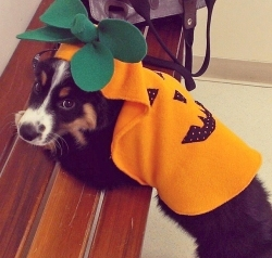 Our Seattle Veterinary Hospital Pet Halloween Costume Contest