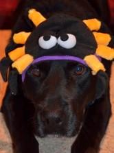 Seattle Veterinarians Pet Halloween Costume Contest
