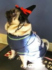 Veterinarians Seattle Pets Halloween Costume Contest