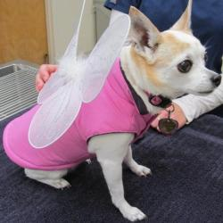 Halloween Costume Contest for Pets - Seattle Veterianrians
