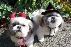 Pet Costume Contest Seattle Veterinarians
