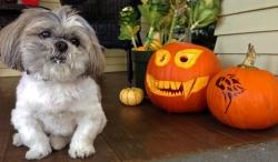 Seattle Veterinarians Pet Halloween Contest