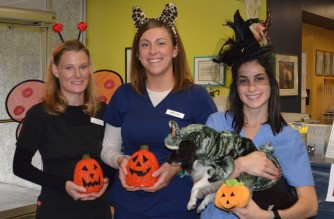 Pet Halloween Costume Contest - Seattle Veterinarians