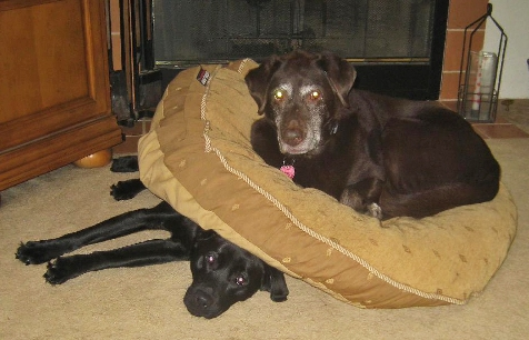 Lacey still queen of the dog bed - Our veterinarians in Settle, encourage sharing!