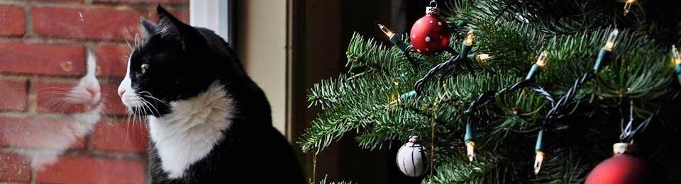 Holiday Cat Tree Window