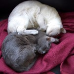 Caspian-and-Brother-web