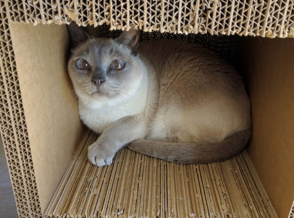 Caspian-in-a-Box-web