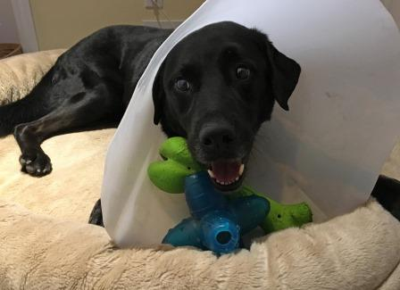 Champ with cone
