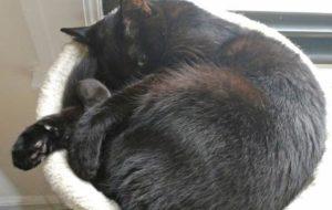 Claudia curled up