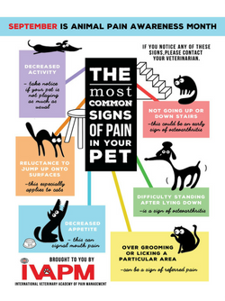 image for Animal Pain Awareness Month